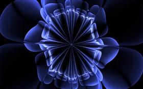 Обои лепестки, свет, линии, цветок