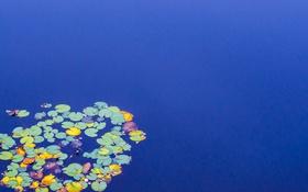 Обои листья, озеро, природа