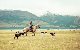 Обои собаки, горы, озеро, женщина, лошадь