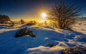 Обои лучи, снег, зима, деревья, кусты, поле, солнце