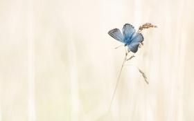Обои природа, фон, бабочка