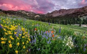 Обои лес, горы, природа.небо, цветы