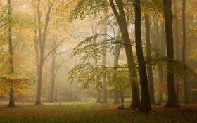 Обои осень, лес, листья, солнце, деревья, туман, ветви