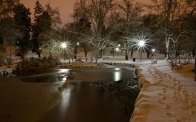 Обои Snow night, Wright Park, Tacoma, Washington