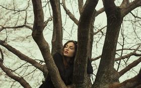 Обои дерево, слезы, лицо, девушка