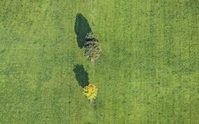 Обои grass, trees, sunny, field, shadows