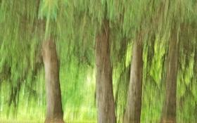 Обои листья, деревья, лес, абстракция, штрих