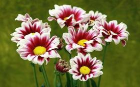 Обои макро, цветы, фото, фокус