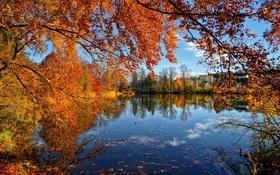 Картинка осень, листья, деревья, пруд, дома
