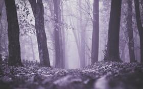 Обои осень, лес, листья, деревья, туман, кресты, могилы