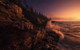 Обои wave, tree, sunset, coast, sea, rock