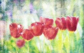 Картинка цветы, стиль, тюльпаны