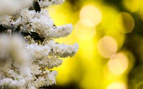 Обои природа, белые, цветы, боке