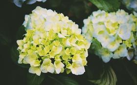Обои цветы, желтые, лепестки, белые