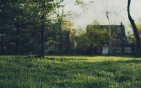Обои поле, трава, деревья, дома, боке
