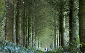 Обои природа, лес, осень