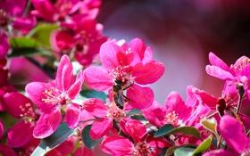 Обои цветы, пчела, лепестки, насекомое
