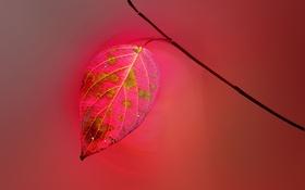 Обои ветка, лист, природа, осень