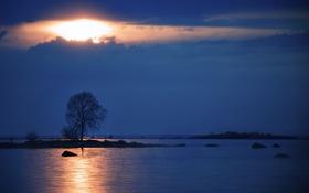 Картинка небо, пейзаж, озеро, дерево, вечер
