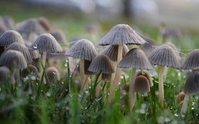Обои трава, капли, грибы, паутина