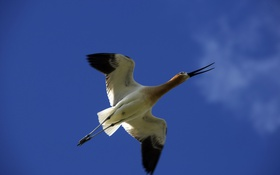 Обои небо, птица, полёт