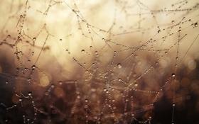 Обои природа, роса, паутина