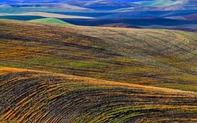 Картинка поле, трава, пейзаж, холмы