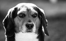 Обои взгляд, друг, собака