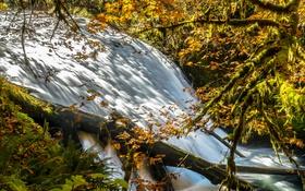 Обои поток, деревья, река, лес, осень