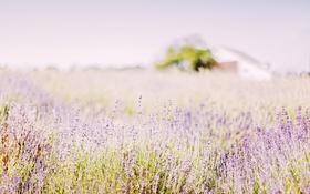 Обои поле, цветы, природа