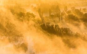 Картинка деревья, пейзаж, туман, река