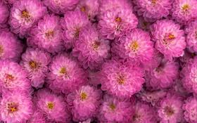 Обои цвет, цветочки, цветы, фон