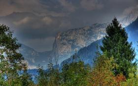Обои листья, Salzburg, леса, ветки, деревья, Австрия, горы