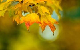Обои цвет, осень, листья, природа