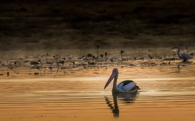 Картинка птицы, озеро, утро