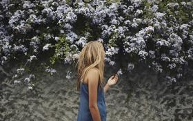 Картинка цветы, девушка, блондинка