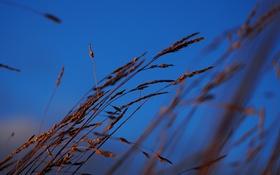 Обои небо, трава, природа, растения