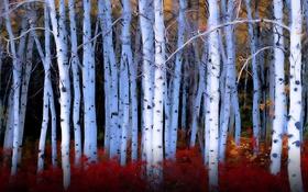 Картинка trees, plants, poplars