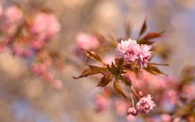 Обои листья, цветы, ветка, размытость