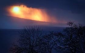 Обои туман, деревья, ночь
