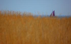 Обои небо, трава, озеро, лодка, растения, парус