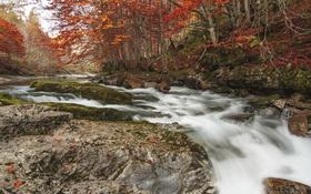Обои река, природа, деревья, лес, осень