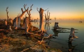 Картинка деревья, туман, озеро, утро