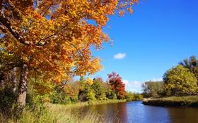 Картинка осень, деревья, река, Канада, Онтарио, район Миссиссога