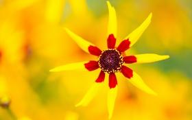 Обои лепестки, природа, цветок