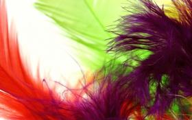 Обои макро, цвет, пкрья