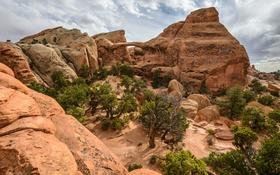 Картинка деревья, пустыня, Jeff Wallace
