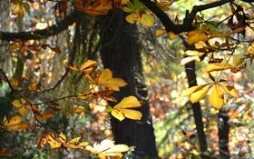 Обои осень, лес, листья, деревья, каштан