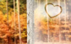 Обои лес, рама, сердечко