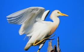 Картинка небо, дерево, птица, крылья, клюв, посадка